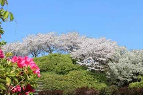 春が来た 福岡